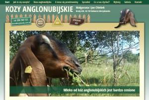 hodowla kóz anglonubijskich
